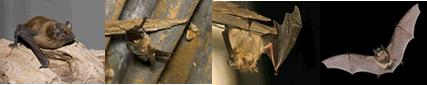 コウモリ被害写真