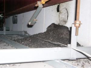 岐阜市のコウモリ被害情報