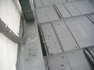 ベランダでのコウモリの被害