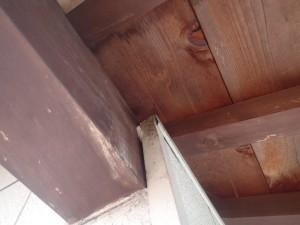 滋賀県長浜市 コウモリ被害対策